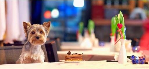 mascota en restaurant